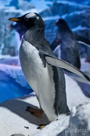 Aquarium, Konstanz