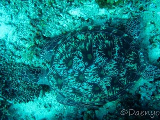 Diving, Gili Islands