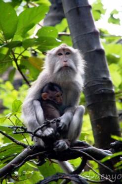 Monkey Forest Ubud, Bali
