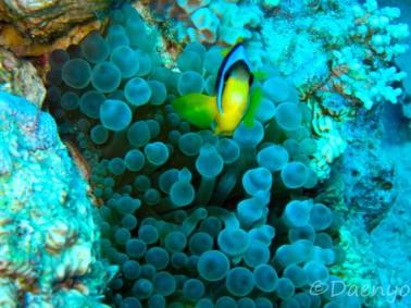 Diving, Aqaba