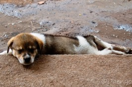 Sleeping Dog, Luang Prabang