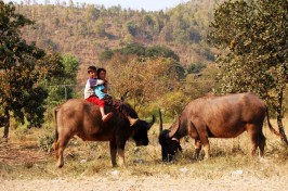 Kids and Buffaloes