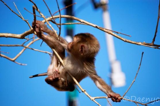 Little Monkey, Kyaikto