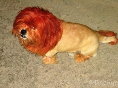 Liondog, Sapa