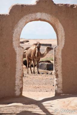 Sahara Desert, Erg Chebbi