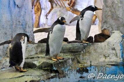 Dubai Mall Zoo
