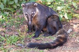 Snookum Bear, Argentina