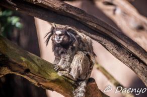 Monkey, Brasil