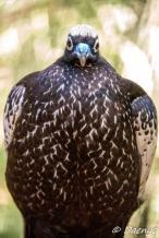 Bird, Brasil