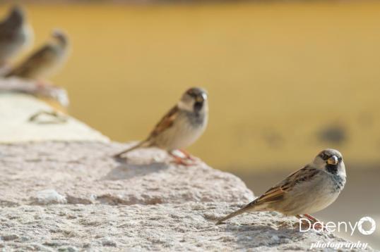 Birds, Cadiz