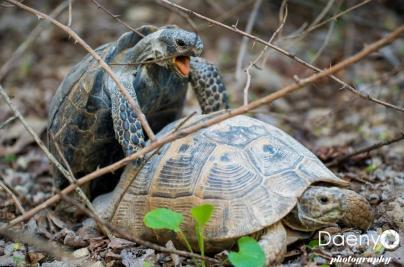 Turtles, Cappadocia