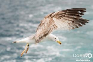 Seagull, Istanbul