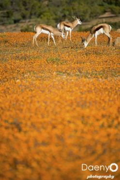 Namaqua National Park