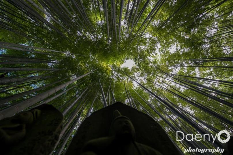 Kamakura Bamboo Forest