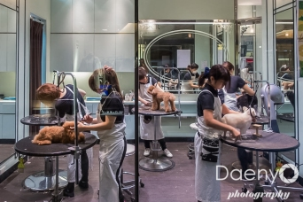 Roppongi dog salon