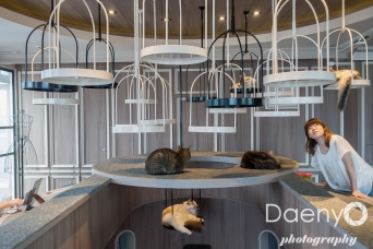 Cat Cafe, Shibuya