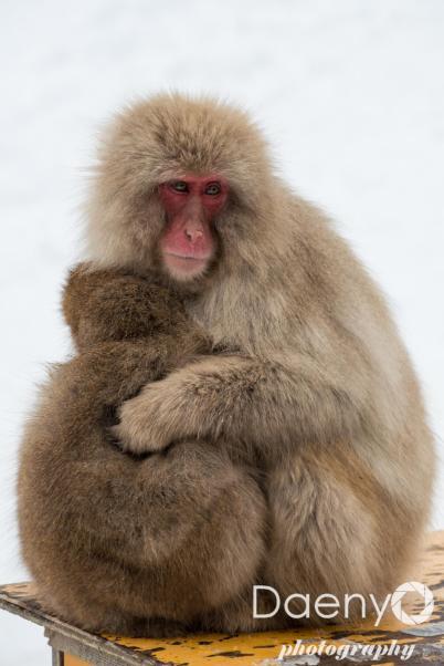 Yudanaka Snow Monkey Park