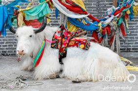 Tibet-10