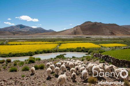Tibet-33