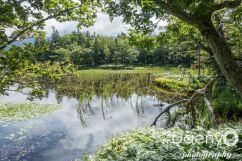 Hokkaido Favs