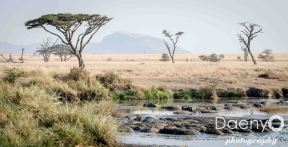 Tanzania Favs-11