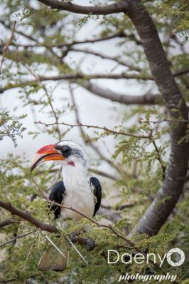 Tanzania Favs-13
