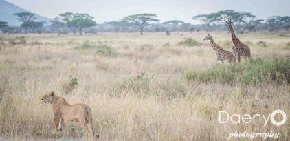 Tanzania Favs-15