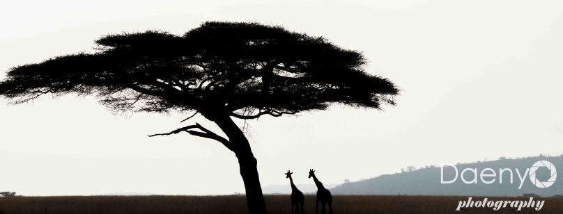 Tanzania Favs-16