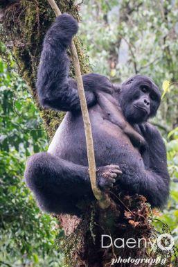 Uganda Favs-46