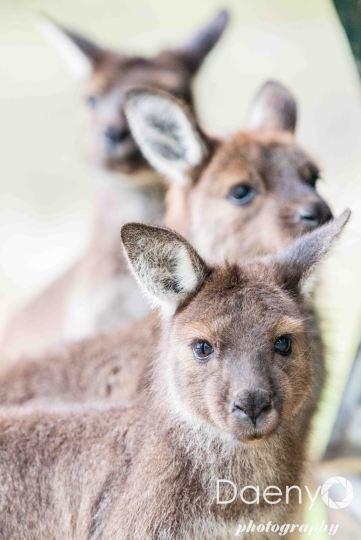 Cleland Wildlife Park, Adelaide