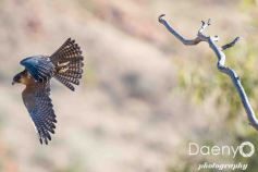 Desert Park, Northern Territory