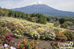 Fuji (25)