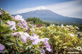 Fuji (40)